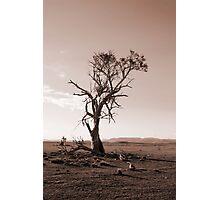 Lonely old Paddock Tree Photographic Print