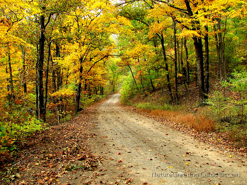 Golden Autumn Road by NatureGreeting Cards ©ccwri