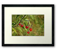 Bitter Sweet Berries Framed Print