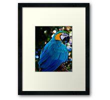 pappagallo blu Framed Print