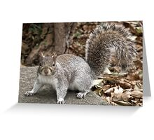 Syd the Squirrel Greeting Card