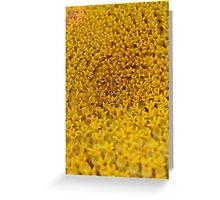 Sunflower Detail Greeting Card