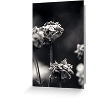 Untitled 3.0 Greeting Card