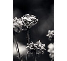 Untitled 3.0 Photographic Print