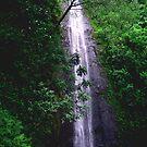 Manoa Falls by kevin smith  skystudiohawaii