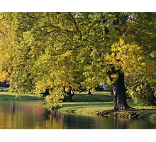 PARK TREE Photographic Print