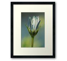 Daisy in the garden  Framed Print