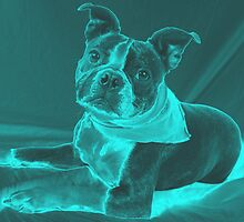 Chroma Doggie by Misti Love