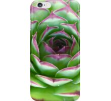Rose-like, green red-tinged succulent iPhone Case/Skin
