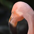 Flamingo Two by saleire