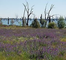 Lake Mulwala  by peter riley