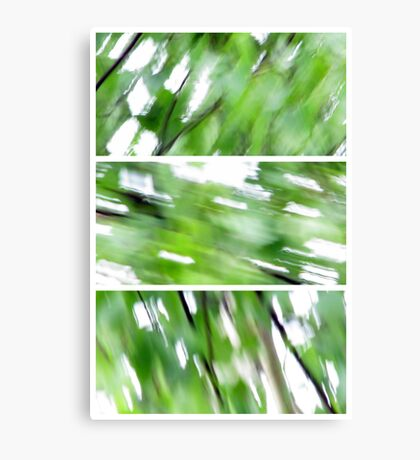 The wind in the Birch Canvas Print