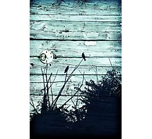 Crows on Blue Wood Photographic Print