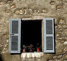 Bonsai in the window by hans p olsen