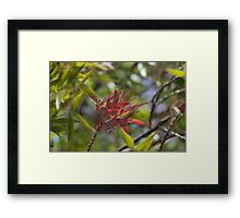 Autumn's Red Glow Framed Print