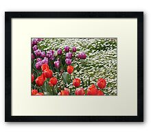 Field of Tulips and Daisies - Canberra Floriade Framed Print