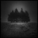 Twilight by redtree