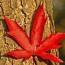 Leaf & Bark by Robert Abraham
