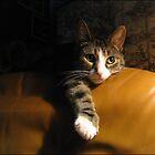 Wistful Puss. by Nina Toulmin