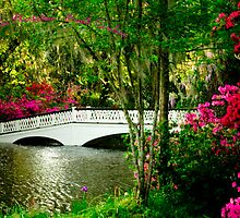 Magnolia Plantation - South Carolina by Mary Campbell