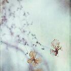 Delicate by AngelaFanton