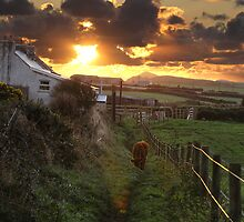 Sunset over the Farm by Lucy Hollis
