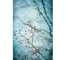 Snowberry Photographic Print
