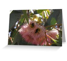 Ants in Gum Blossoms Greeting Card