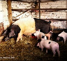 Sow and Piglets by Jennie Anderson