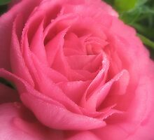 Deep Pink by Melissa Park
