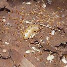 Termite Queen & Associates by peterstreet