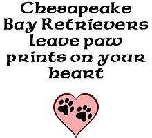 Chesapeake Bay Retrievers Leave Paw Prints On Your Heart by kwg2200