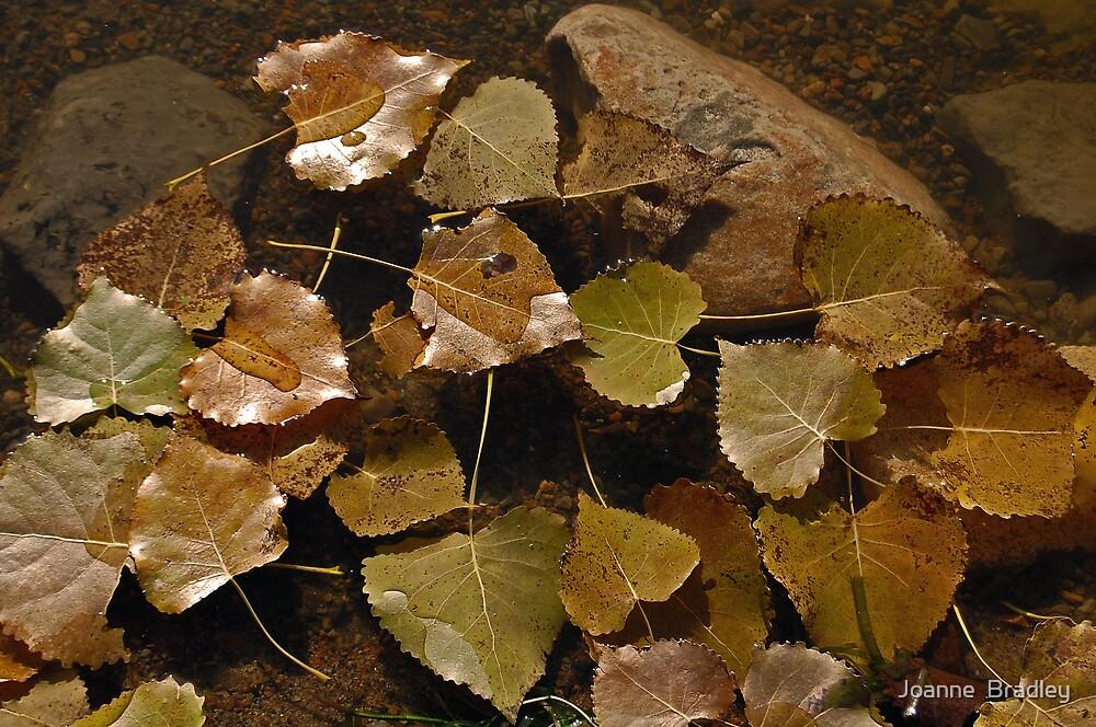 Gold Leafed by Joanne  Bradley