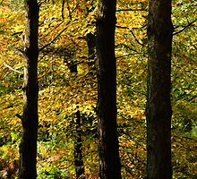 October Trees by IanJTurner