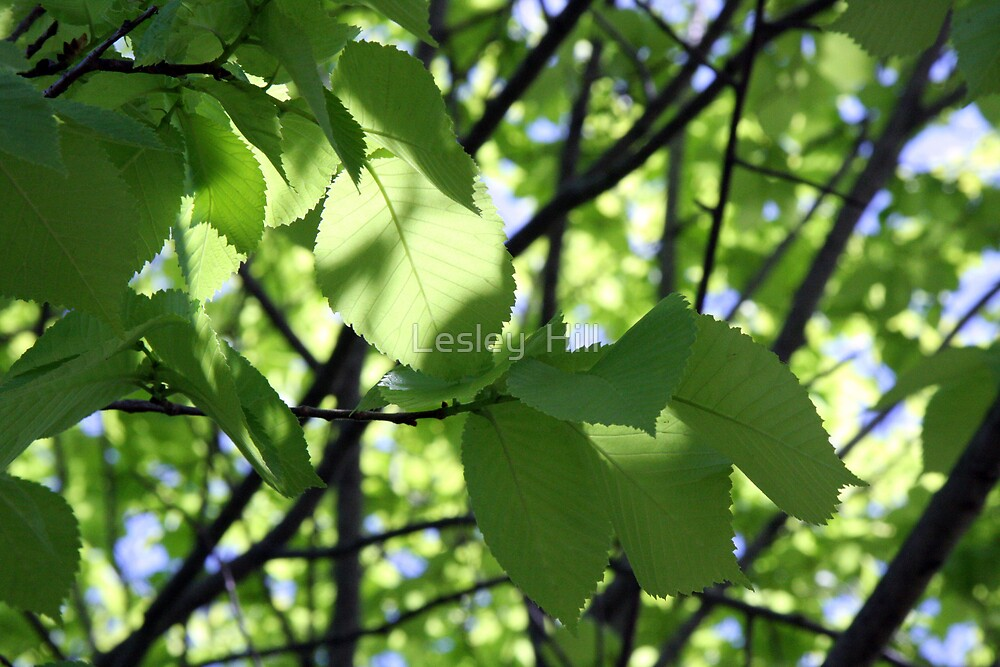 Dappled Green! by Lesley  Hill