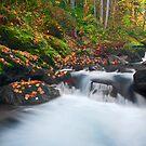 Autumn Treasure by DawsonImages