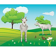 Goat and Green Lawn3 Photographic Print