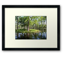 Reflections in the swamp Framed Print