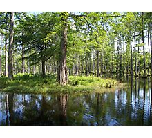 Reflections in the swamp Photographic Print