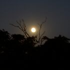 Yellow Moon Over South Yarra by AmyZepplin