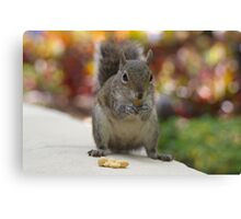 squirrel grabbing peanuts Canvas Print