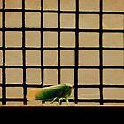 Freedom by lumiwa