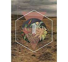 Desert Plants Photographic Print
