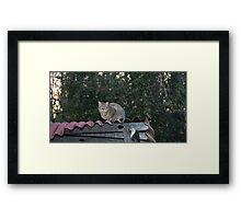 Brown Kitty Framed Print