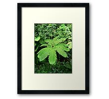 Help me!  I'm pretty green at this! Framed Print