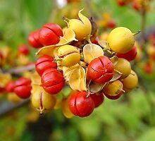 Bittersweet Berries by Linda Marlowe
