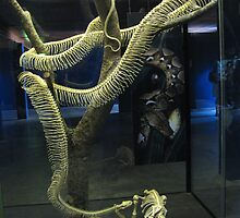 Reticulated Python Skeleton by Marilyn Harris