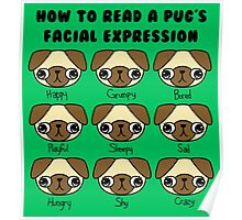 The many facial expressions of a pug Poster