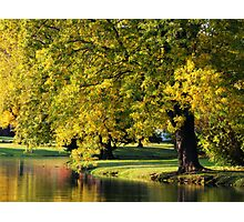PARK TREE ORTON Photographic Print