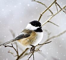 Snowy Chickadee Bird by Christina Rollo